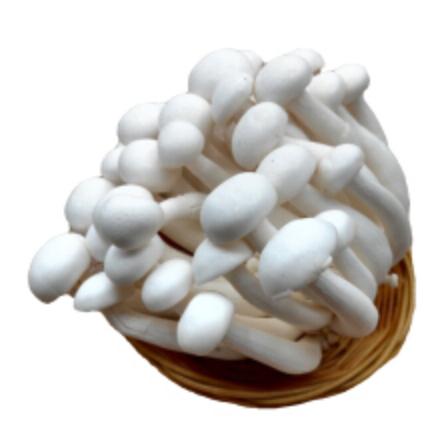 新鲜菌菇 白玉菇 光明九道知名品牌 150g 两款可选