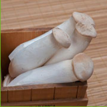 大规格一级袋栽杏鲍菇 长度约20公分 每箱10公斤