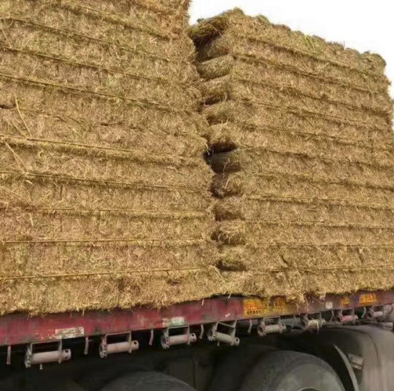 稻草供应 适用于双孢菇草菇平菇 产地河北 可供应多种规格 年供应5000吨