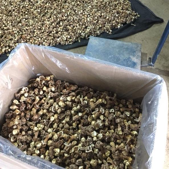 云南文山干制姬松茸 每件25kg 品质优良 单价低至每斤55元 可供全国各大批发 餐饮 出口企业