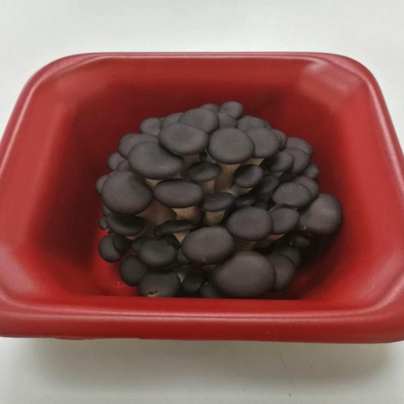 莲花仙子 新鲜茸菇 100g一盒