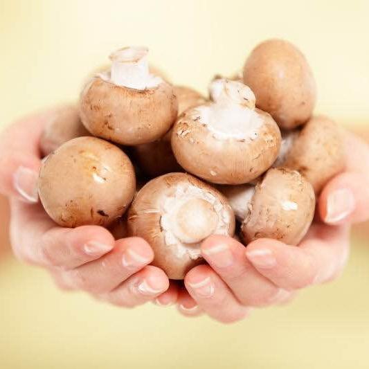 有机香啡菇 净重6KG